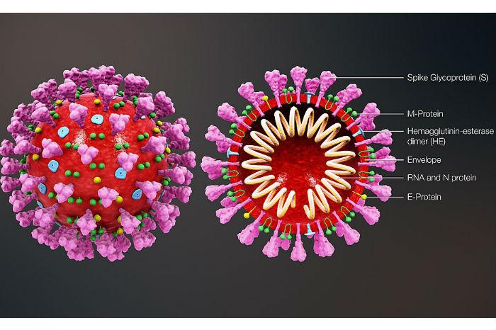 coronavirus_structure_details1